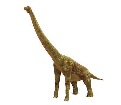 Brachiosaur Photograph - Brachiosaurus Dinosaur by Roger Harris