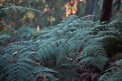 Photograph - Bracken by Carole Hinding
