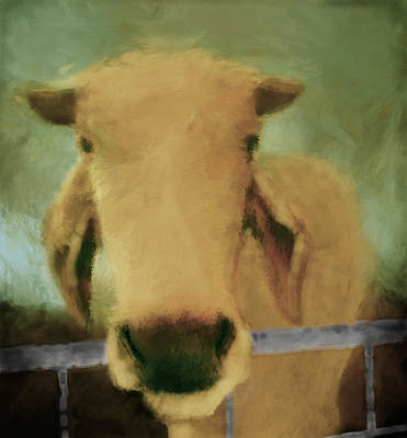Cow Digital Art - Brahma Cow Greeting by Ann Powell