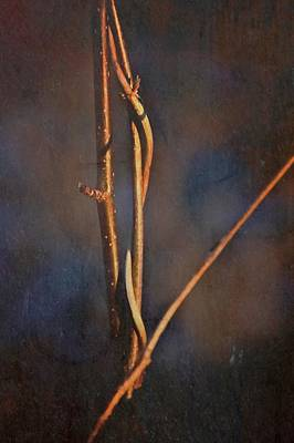 Branch Abstraction Art Print