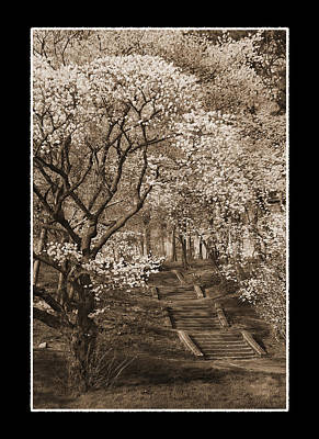 Branchbrook Park In Sepia Art Print