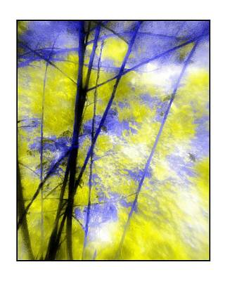 Photograph - Branches In Blue And Yellow by Judi Bagwell