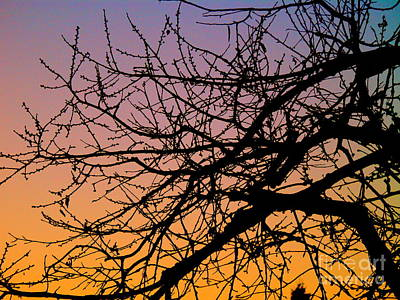Photograph - Branches In Color by Michael Canning