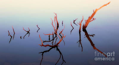 Wetlands Photograph - Branching Out by Keith Kapple
