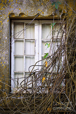 Outlook Photograph - Branchy Window by Carlos Caetano