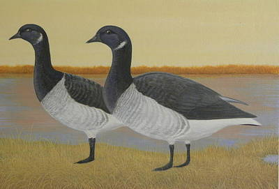 Brant Geese Art Print by Alan Suliber