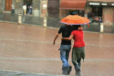 Photograph - Braving The Rain by Vicki Hone Smith