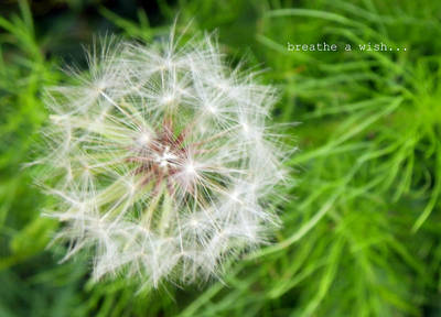 Art Print featuring the photograph Breathe A Wish by Robin Dickinson