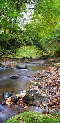 Photograph - Bridge In Cawdor Big Wood by Joe Macrae