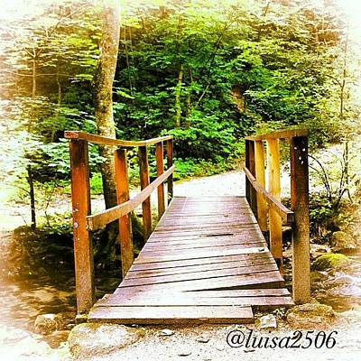 Forest Wall Art - Photograph - Bridge by Luisa Azzolini