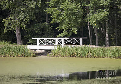 Bridge Over An Algae Covered Pond Art Print by Jaak Nilson
