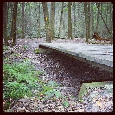 Trail Wall Art - Photograph - #bridge #woods #trees #trail #path by Ryan Dieter