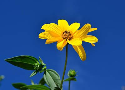Photograph - Bright And Yellow by Barbara Walsh