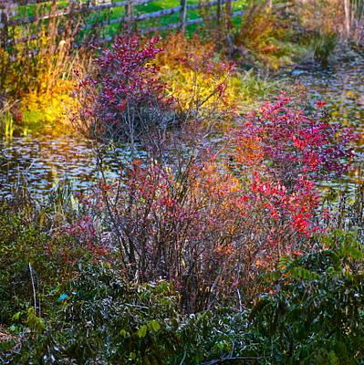 Photograph - Bright Autumn Light by Byron Varvarigos