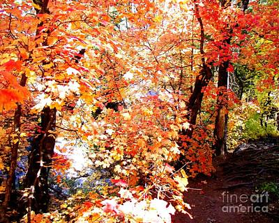 Photograph - Bright Autumn Path by Jayne Kerr