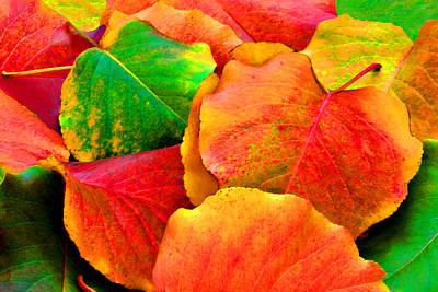 Bright Beautiful Fall Leaves Art Print