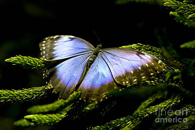 Leda Photograph - Bright Blue  by Leslie Leda