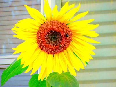 Bright Happy Sunflower Face Art Print by Amy Bradley