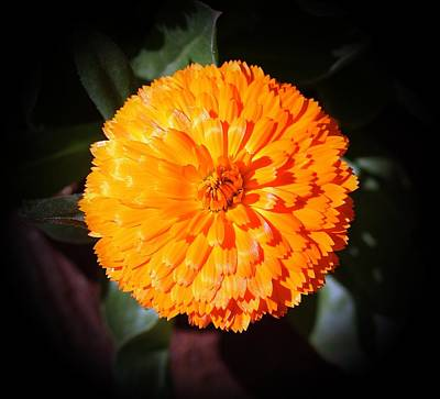 Photograph - Bright In Orange by Louise Mingua