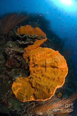 Bright Orange Sponge With Sunburst Art Print by Steve Jones