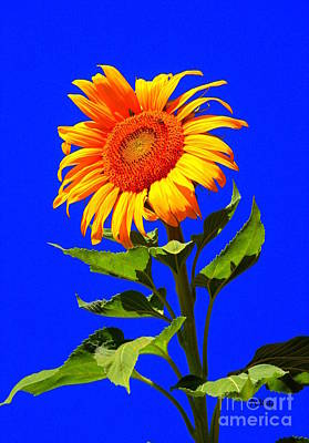 Photograph - Bright Sunflower by Patrick Witz