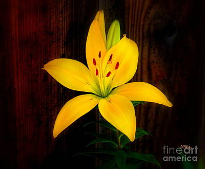 Photograph - Brillant Yellow Lily by Patrick Witz