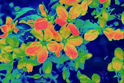 Brilliant Blossoms II Art Print by Tessa Murphy