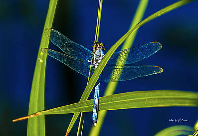 Photograph - Brilliant Dragon Fly by Edward Peterson