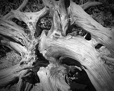 Bristlecone Pine Roots White Mountains Ca Art Print by Troy Montemayor