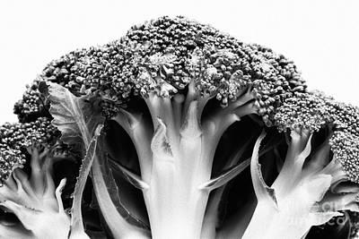 Broccoli On White Background Art Print