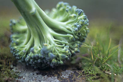 Broccoli Art Print by Veronique Leplat