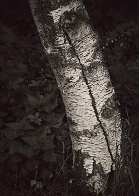 Birch Bark Photograph - Broken Skin by Odd Jeppesen