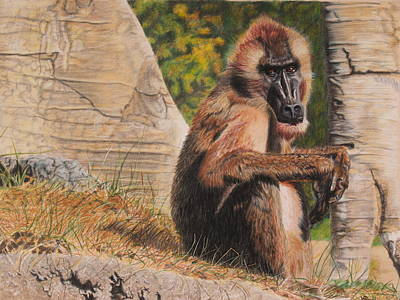 Drawing - Bronze Baboon by Vicky Path