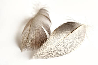 Photograph - Bronze Mallard Feather 4 by Steve Purnell