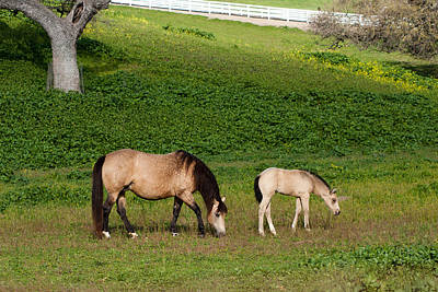 Broodmare Photograph - Broodmare With Her Foal by Dina Calvarese