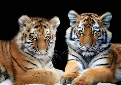 Tigris Digital Art - Brothers by Julie L Hoddinott