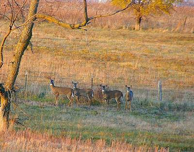 Missouri Whitetail Photograph - Brown And Gold by Misty Dawn Seidel