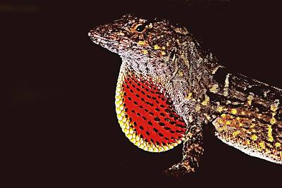 Photograph - Brown Anole by Ira Runyan