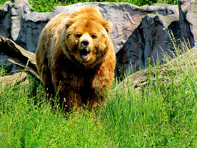 Art Print featuring the photograph Brown Bear by Barbara Walsh