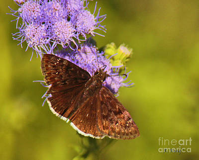 Photograph - Brown Beauty by Roena King