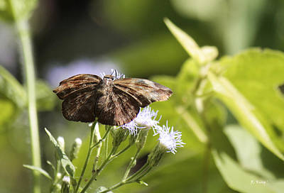 Photograph - Brown Butterfly Or Moth by Roena King