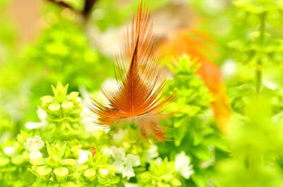 Photograph - Brown Feather   In The  Green Busher With White Flowers  by Puzzles Shum