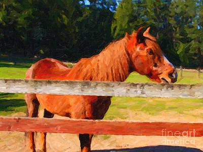 Brown Horse Behind Fence . Painterly Art Print