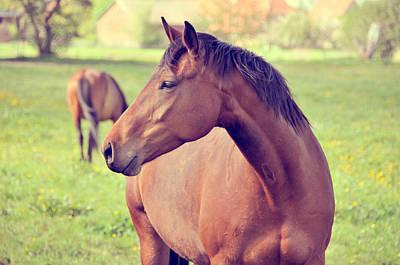 Brown Horse Print by Euge de la Peña