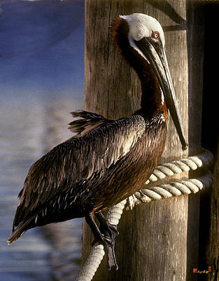 Photograph - Brown Pelican In Key West 9l by Gerry Gantt