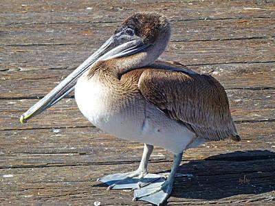 Photograph - Brown Pelican by Marie Morrisroe
