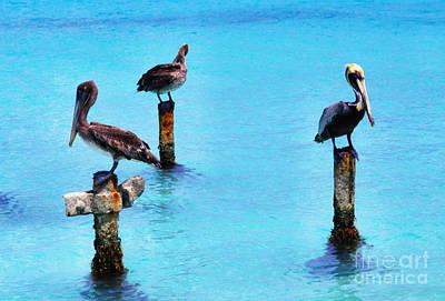 Brown Pelicans In Aruba Art Print by Thomas R Fletcher