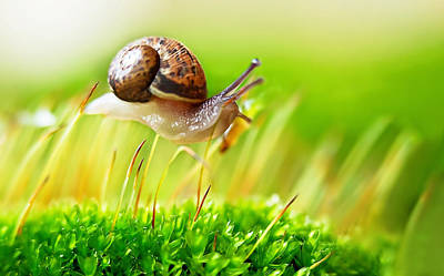 Y120817 Photograph - Brown Snail by Copyright OneliaPG Photography