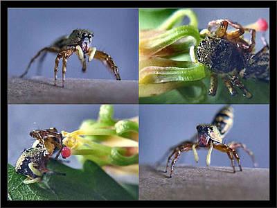Photograph - Brown Spider 2001 by Glenn Bautista