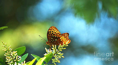 Photograph - Brown Spotted Butterfly by Peggy Franz